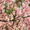 Spring is here – cherry blossoms are everywhere