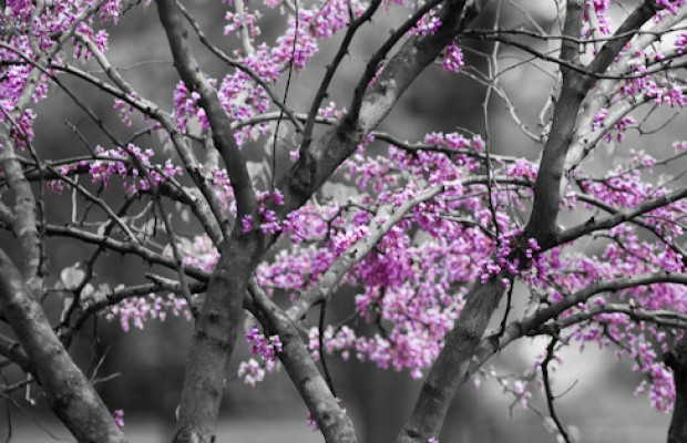Professional photography wallpaper landscape macro nature the color of spring mightylinksfo